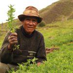 Productor de pastos y alfalfa